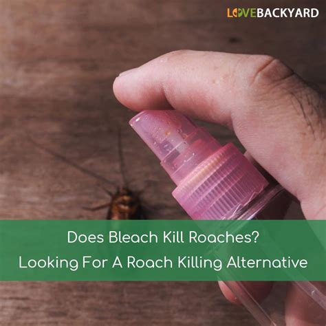 Does Bleach Kill Roaches? Looking For A Roach Killing