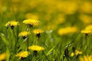 Gelbe Stellen Im Rasen : rasen berd ngt was tun ~ Markanthonyermac.com Haus und Dekorationen