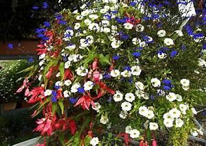 Blumenkübel Bepflanzen Sommer : balkonkasten bepflanzen beispiele 02 calibrachoa minipetunien zaubergl ckchen sommer sommerpflanzung ~ Eleganceandgraceweddings.com Haus und Dekorationen