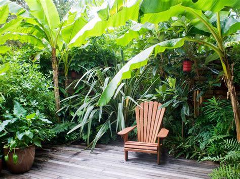 tropical landscaping trees tropical garden retreat hgtv