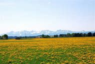 Country Spring Scenery