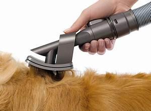 Aspirateur Poil De Chien : dyson groom aspirateur sp cial mue poils de chiens le blog du shiba inu et des chiens japonais ~ Medecine-chirurgie-esthetiques.com Avis de Voitures