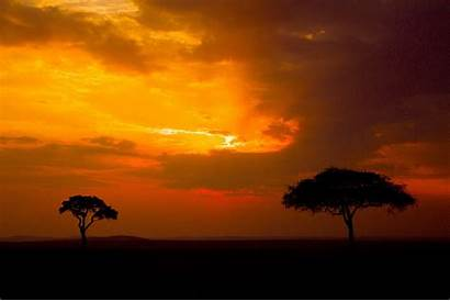 Mara Masai Kenya Sunset African Safari Trees