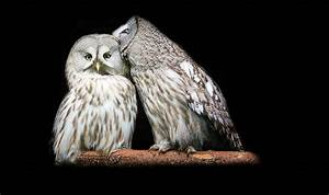 Night Owl Natural Images Best Quality HD 1080p
