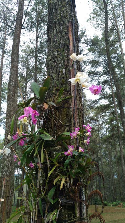orchid forest cikole lembang destinasi wisata bunga