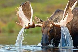 Water cascading... Elk Animal Quotes