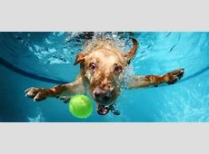 Wallpaper Labrador, dog, underwater, cute animals, funny