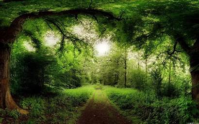 Pagan Celtic Forest Wallpapers