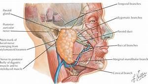 13  Oral Cavity