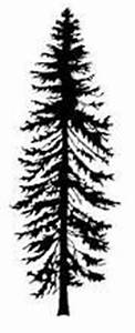 Aspen's Roots | Trees, Aspen trees and Blog