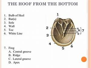 Various Affection Of Equine Hoof