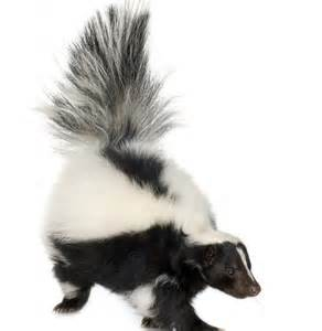 Skunk Smell House Gallery