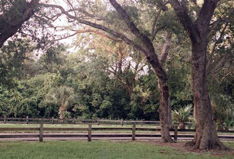 tree pair  indian hammocks park kendall florida pentax user photo gallery