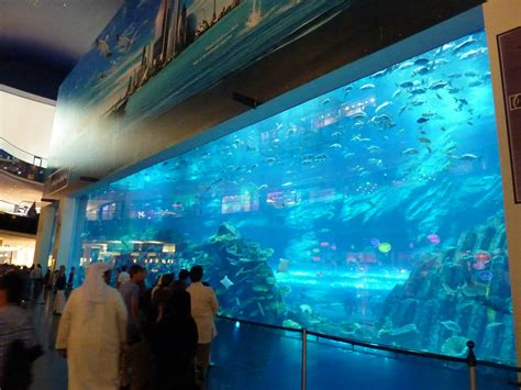 dubai mall aquarium viewing window 187 dubai aquarium underwater zoo gallery