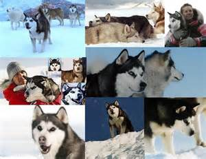 Eight Below Dogs Max