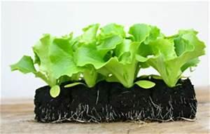 Salat Pflanzen Abstand : gew chshaus bepflanzen aussaatkalender gem se selber anbauen ~ Markanthonyermac.com Haus und Dekorationen