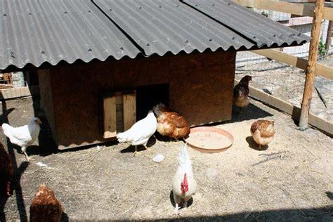allevamento animali da cortile agriturismo ristorante shakei como il nostro allevamento