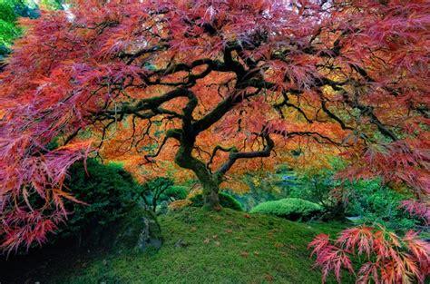 garden in portland or japanese garden in portland