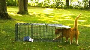 advantek live trap for cat raccoon opossum and