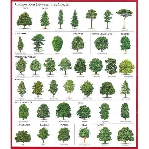 Iowa Tree Nursery by The 25 Best Tree Identification Ideas On Pinterest Tree