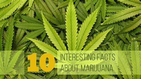 interesting facts  marijuana youtube