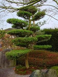 Japanischer garten baumgestaltung for Garten planen mit bonsai lebensbaum kaufen