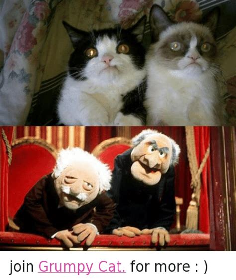 Y Join Grumpy Cat For More  Cats Meme On Sizzle