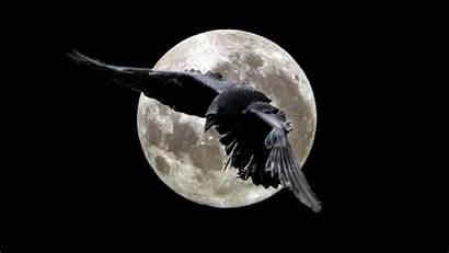 Raven Ravens Wallpapers Moon Crows Night Crow