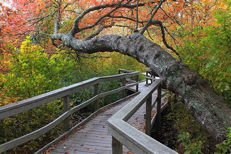 Red Maple Swamp Cape Cod National Seashore Photograph By
