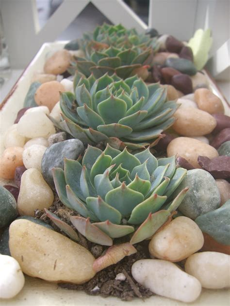 Succulent Centerpieces Cheap N Quirky Wedding