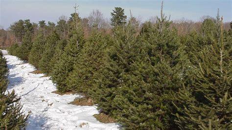 christmas tree farms upstate ny christmas tree farm guide new york new jersey 5890