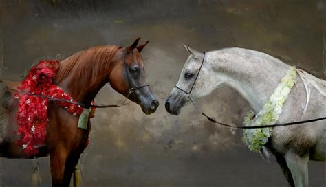 arabian horse horses cost much does arabe cheval hd believe breed care wallpapers brown k sang pur won 4k 5k