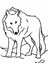 Wolf Coloring Pages Animal Arctic Jam Template Printable Drawing Cartoon Animals Cute Wolves Pack Clipart Animalplace sketch template