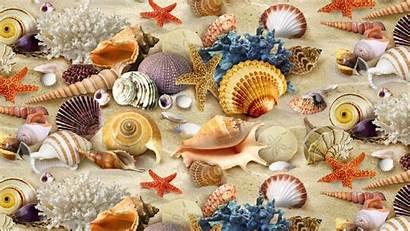 Coral Starfish Sand Wallpapers Seashell Sea Shells