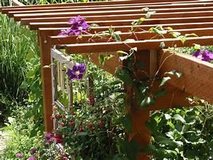 Support Plantes Grimpantes : choisir une plante grimpante ~ Dode.kayakingforconservation.com Idées de Décoration