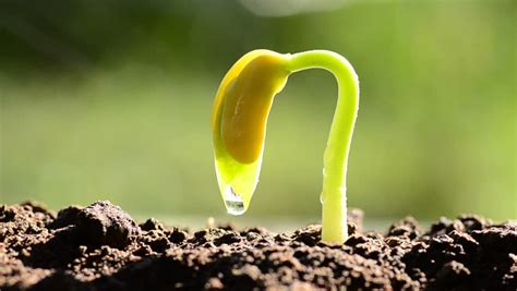 seedling agriculture   life stock footage video