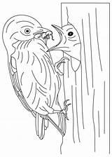 Bluebird Coloring Mountain Feeding Template sketch template