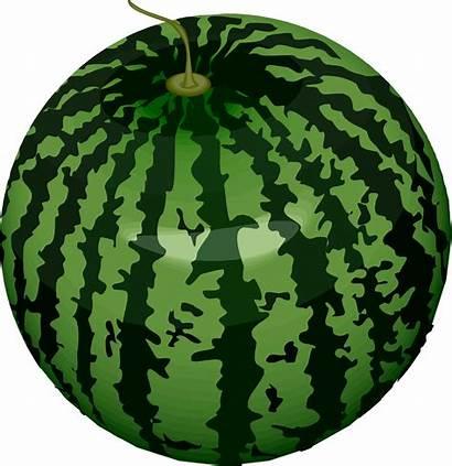 Watermelon Clipart Vector Fruits Transparent Fruit Webstockreview
