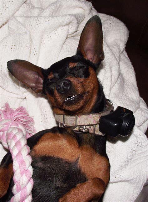 dogs collar dangerous peta