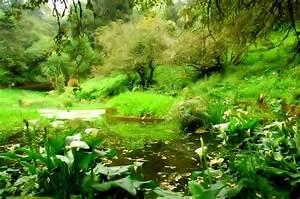 Droguerie De L Eden : den o jardim do para so foto de m rio santos olhares ~ Dailycaller-alerts.com Idées de Décoration