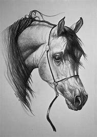 Arabian Horse Head Pencil Drawings