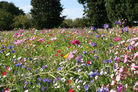 Naturnahen Garten Gestalten ǀ Tipps Im Haas Galabau Blog
