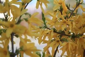 Blumen Im Frühling : gelbe blumen im fr hling foto bild pflanzen pilze flechten bl ten kleinpflanzen ~ Orissabook.com Haus und Dekorationen