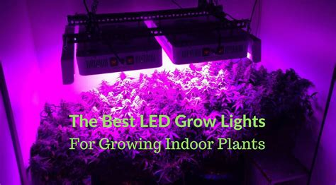Best Indoor Grow Lights by The Best Led Grow Lights For Growing Indoor Plants Buyer