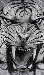 25 White Tiger Pictures – WeNeedFun
