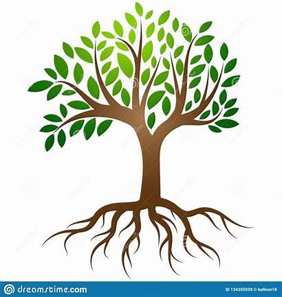 Roots Tree Clip Radici Albero Company Clipart