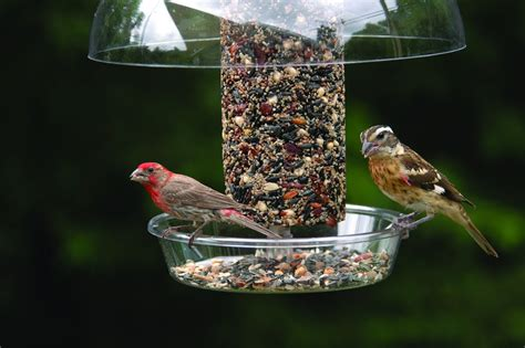 unique bird feeders birds unlimited unique bird feeders