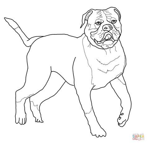Amerikaanse Bulldog Kleurplaat by American Bulldog Coloring Page Free Printable Coloring Pages