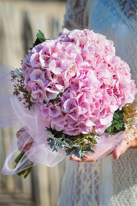 rosa und rosa rosen vuvuzela rosa apricot bestellen