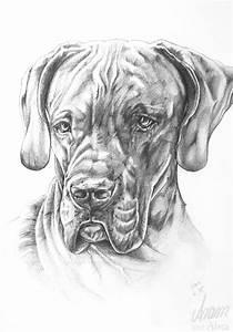 Bleistifte Zum Zeichnen : hund malen lassen das musst du ber die verschiedenen m glichkeiten wissen ~ Frokenaadalensverden.com Haus und Dekorationen
